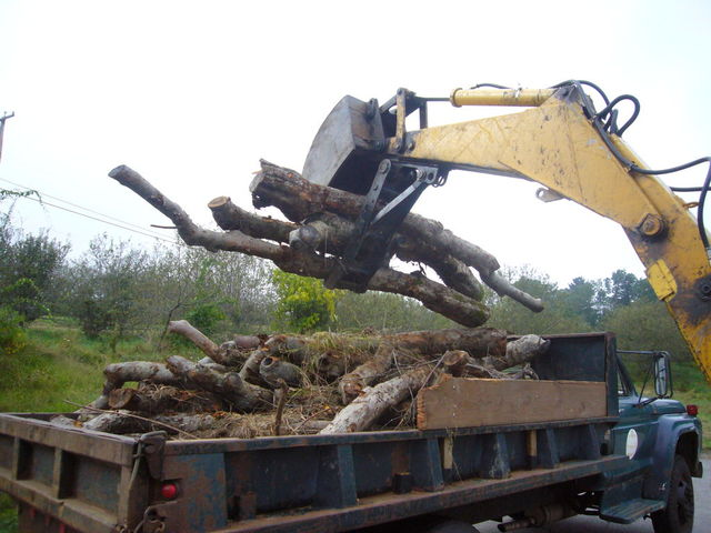 MT1035 excavator thumb putting logs into a dump truck