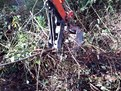 MT618 mini excavator thumb installed on KUBOTA KH-41 clearing out brush